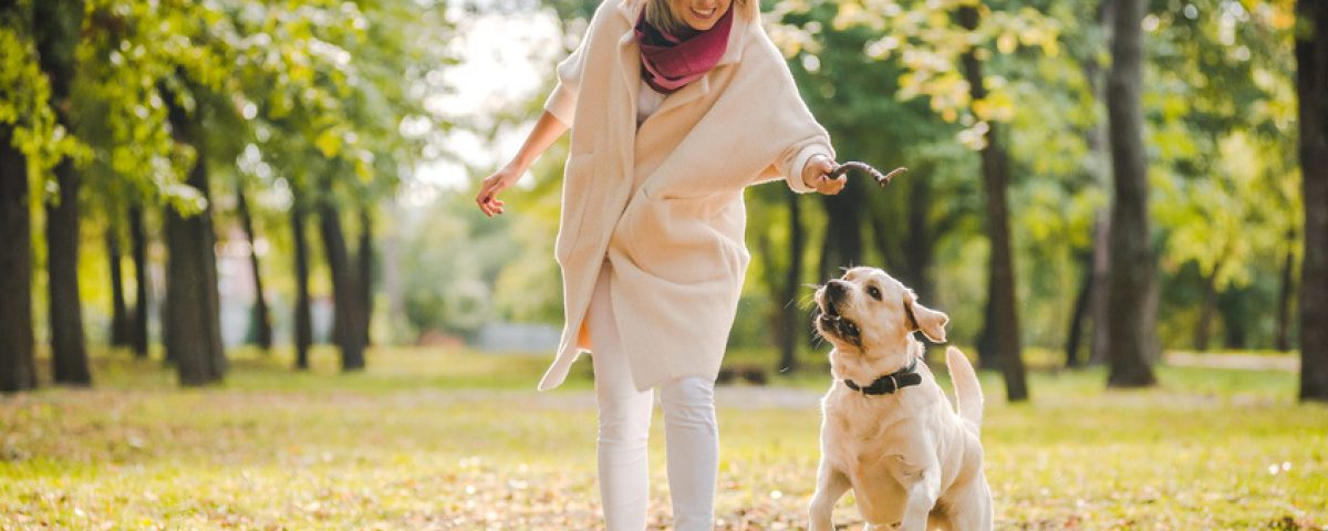 Abenteuerspaziergang mit einem Hund