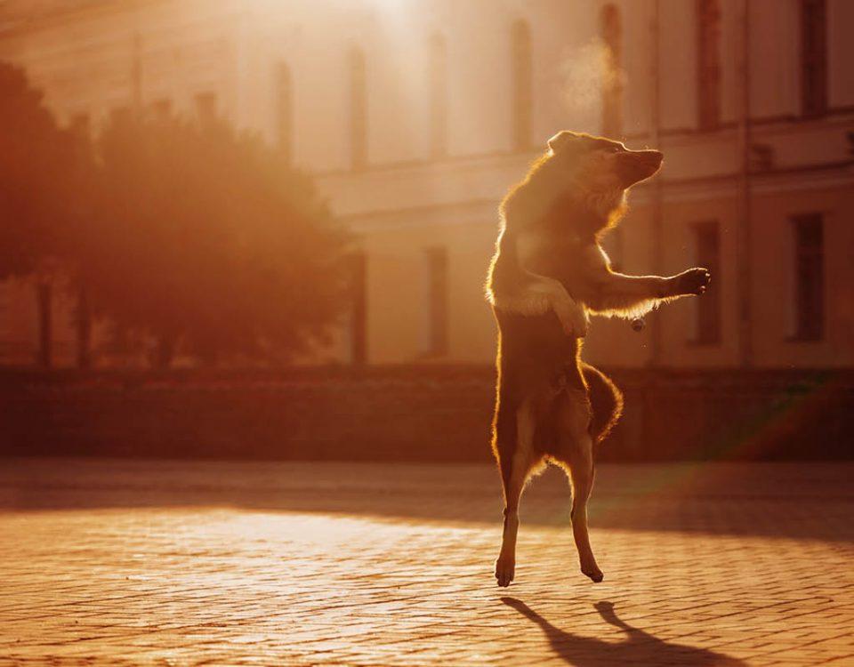 Hundemagazin - Beitrag Dancing Dog