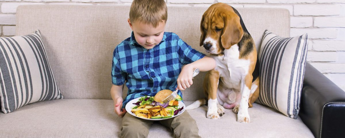 Dürfen Hunde Kartoffeln fressen