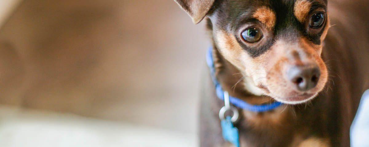 Hundemagazin - Welpen an Halsband gewöhnen