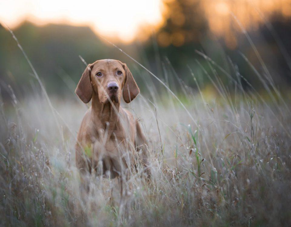 Jagdhund - Hundemagazin