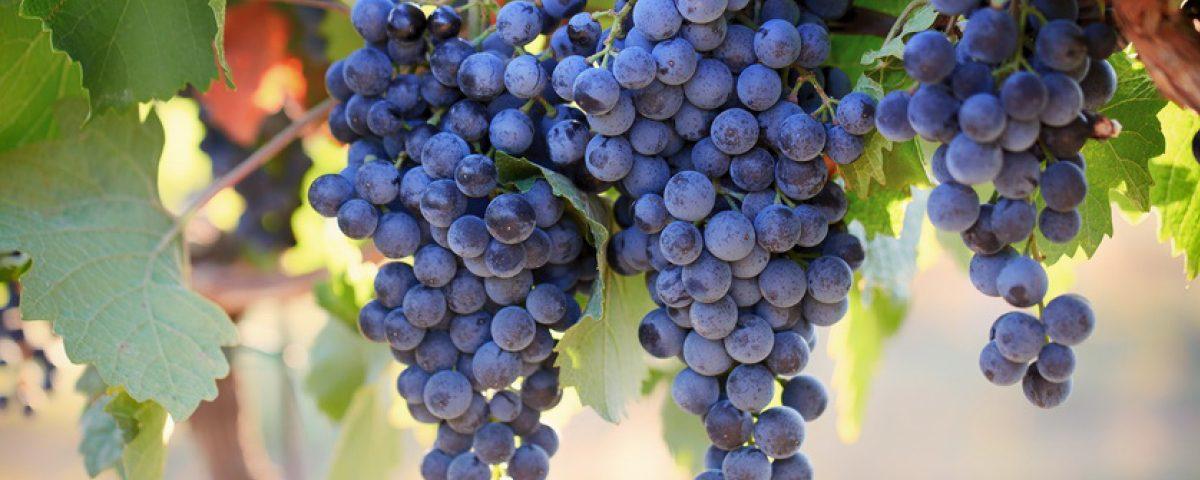 Durchfall Von Weintrauben