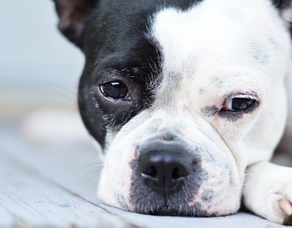hundemagazin.info-beitrag-wesenstest-bei-hunden