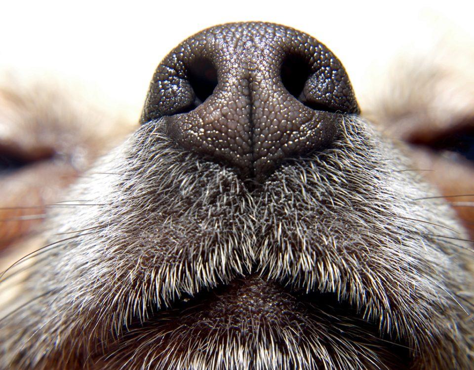 Geruchssinn des Hundes schärfen