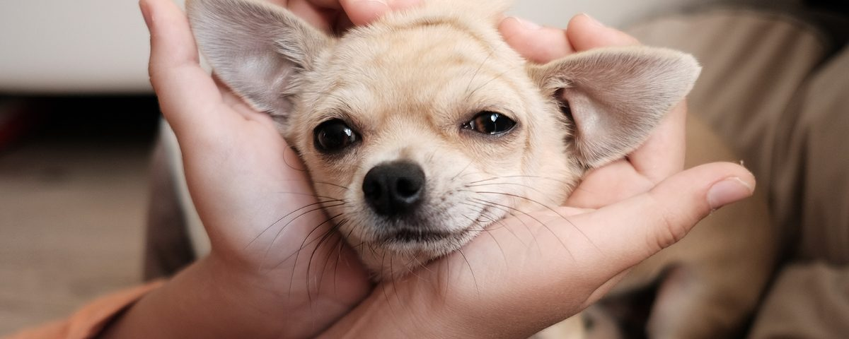 Einige Anzeichen für Schmerzen bei einem Hund