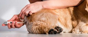 Anzeichen für Fieber beim Hund