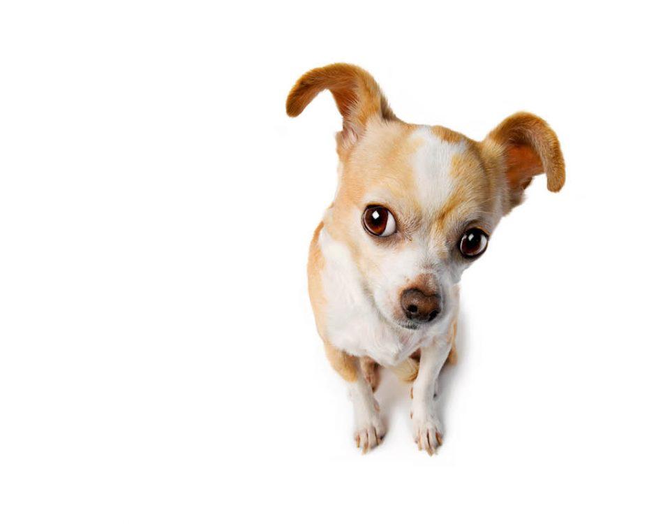Hundemagazin - Hat mein Hund Untergewicht