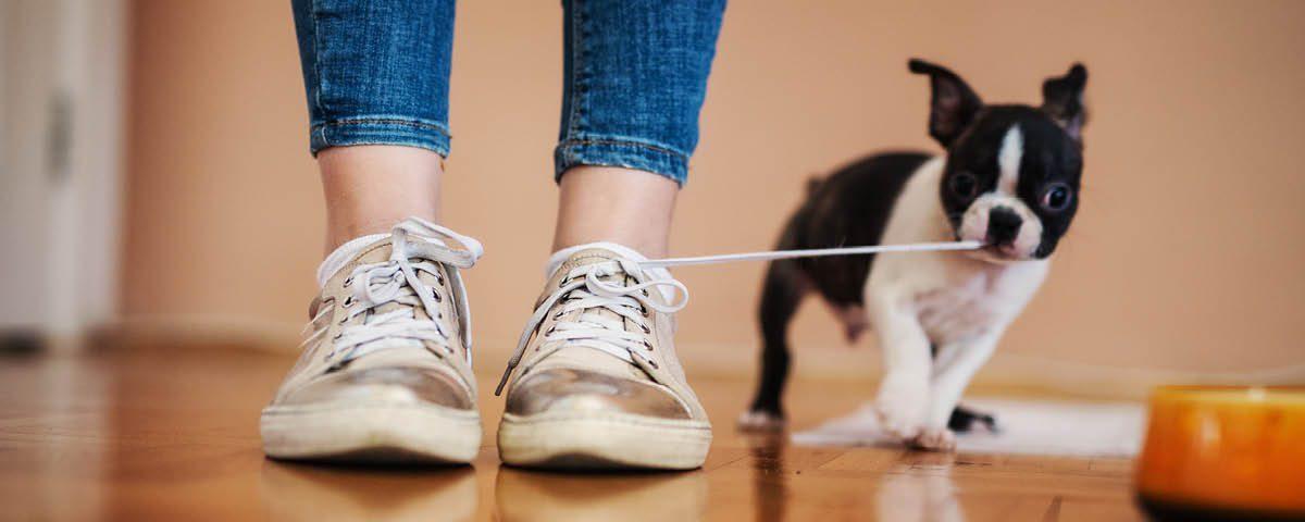 Dem Hund schlechte Angewohnheiten abgewöhnen