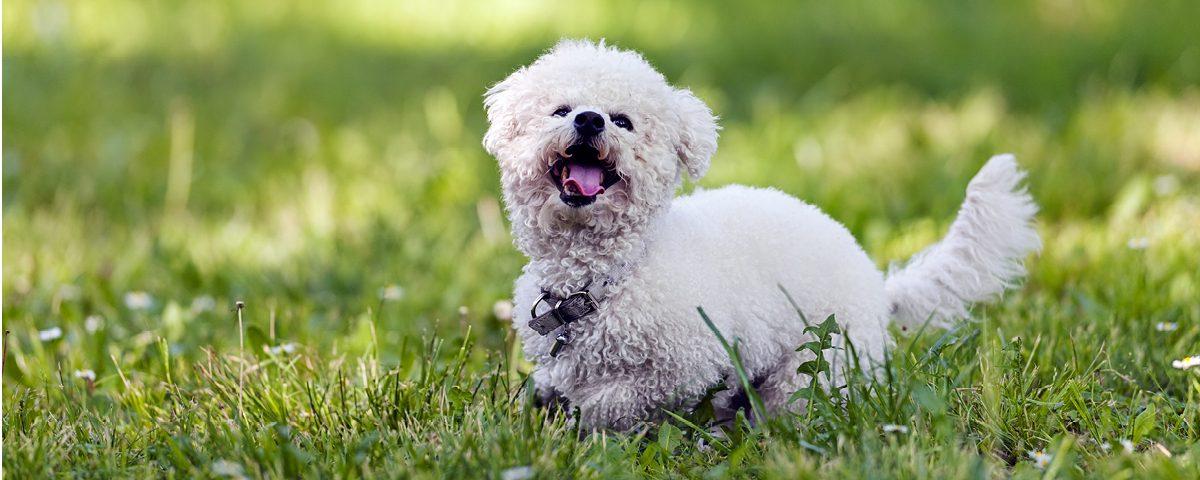 Hunde für Allergiker