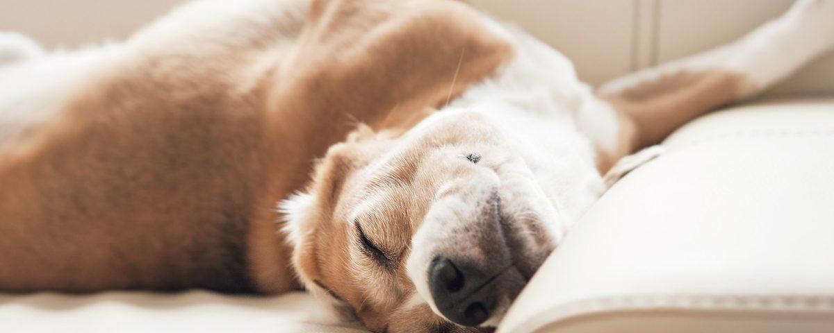 Darf man Hunde wecken?