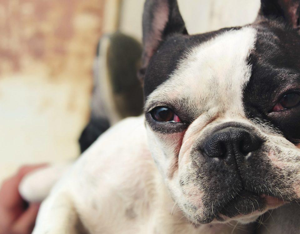 Was Hunde hassen?