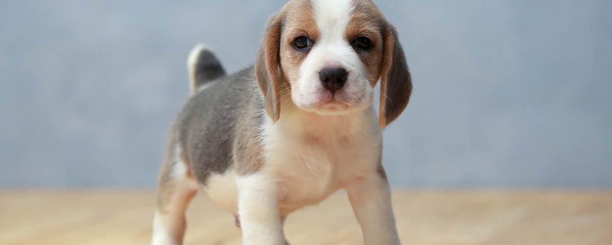 Hundemagazin - Dem Hund Beibringen das er nicht ins Haus pinkeln darf