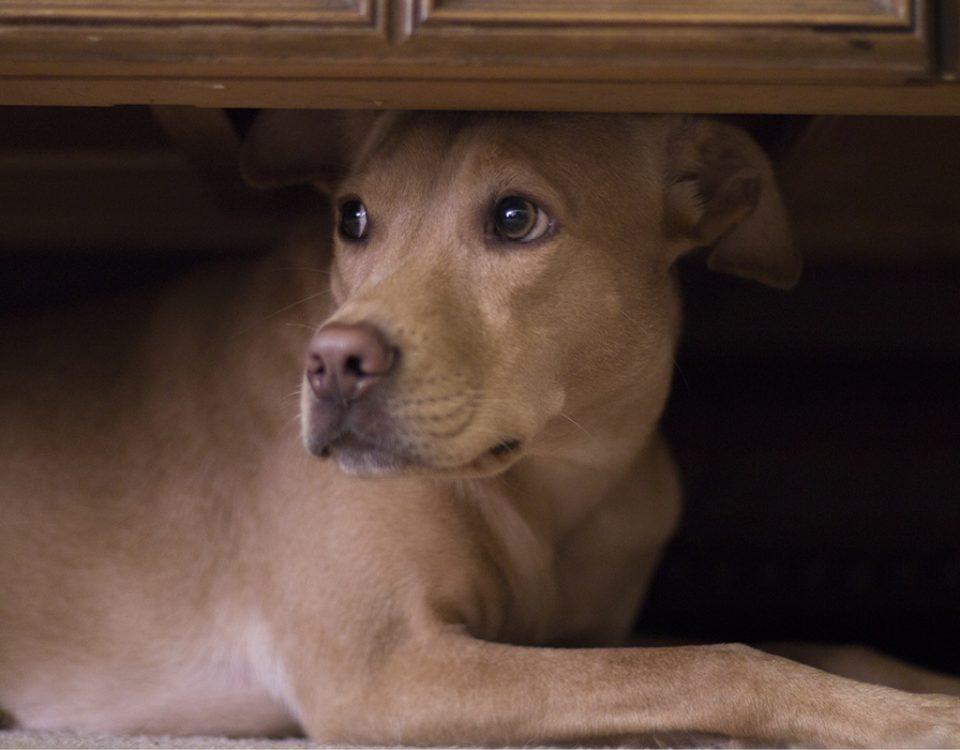 Hund darf nicht ins Haus pinkeln
