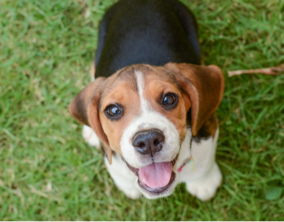 Welche Hunderassen werden am Ältesten?