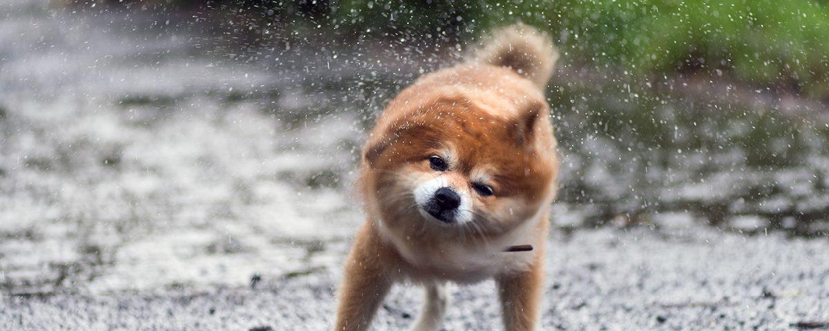 Gassigehen wenn es regnet