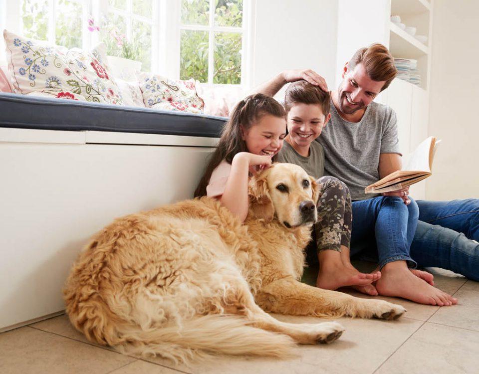 Hundemagazin - Können Hunde die Wechseljahre bekommen